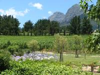 Mont Destin Wine Estate in Franschoek