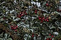 Holly Berries WC
