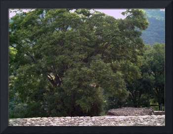 Tree next to Malinalco Ruins by Christopher Johnson