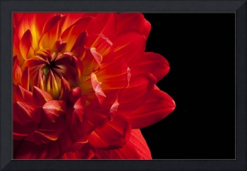 Red Dahlia by Dawn LeBlanc