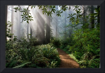 Redwood Path by Peter B. Kunasz
