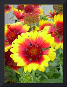 Red and Yellow Flowers by Kent Lorentzen