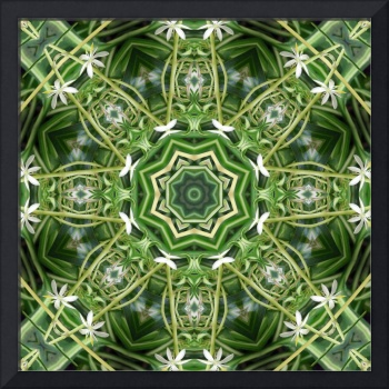 Spider Plant Kaleidoscope Art 5