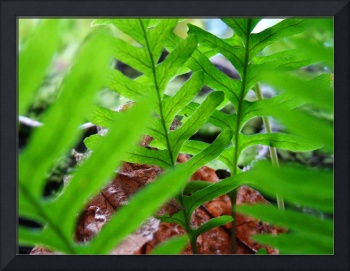 FERN Art GREEN Forest Ferns Giclee Prints Baslee