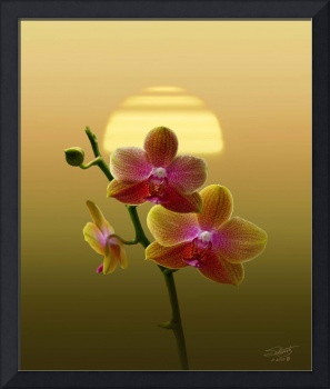 Gold Orchid Sunset