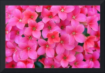 Divine Pink Flower Stretched Canvas Prints