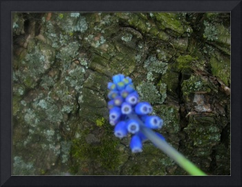 feng shui: bluebell and moss tree