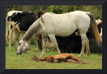 White Mare and Colt in a Meadow