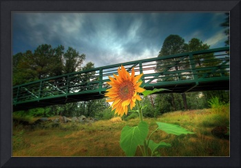 Sunflower bridge