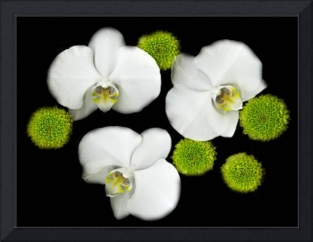 Orchids, black white and green art photography