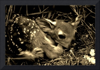 Baby Fawn with butterfly on their nose