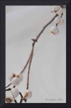 White Berries, White Backdrop