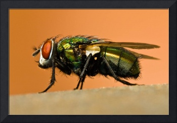 What a fly