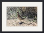 Running Road Runner IMG_6719 by Jacque Alameddine