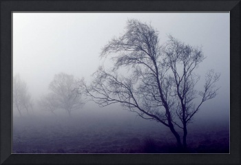 Bare Trees In Thick Fog, Peak District National Pa