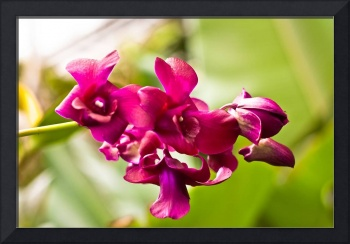 Tropical Orchids 4