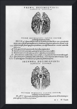 Vascular system of the brain by Andreas Vesalius