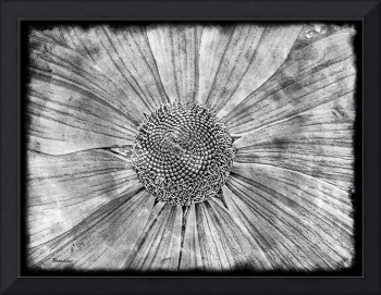 21a Abstract Floral Digital Art
