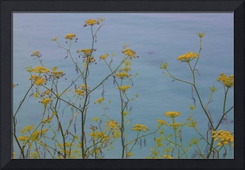 yellow flowers, aqua sea