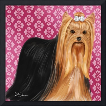 Show Dogs Yorkshire Terrier