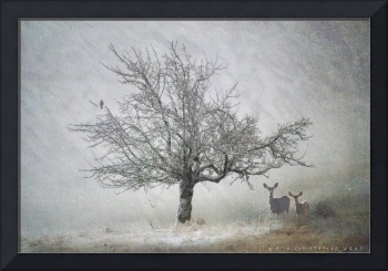 lone tree kestral and deer