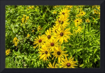 Yellow Flowers With Green Plants