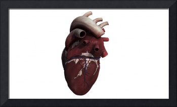 Three dimensional view of human heart, right side
