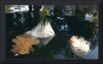 Floating Feathers and Leaf