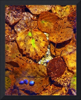 Burnished Leaves and Blueberries