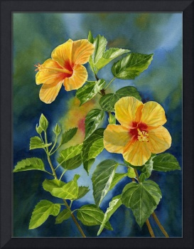 topical yellow orange hibiscus with background