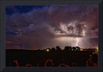 Lightning over Sunflower Field