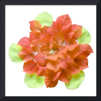 Mandala Orange Bougainvillea Lime Hibiscus