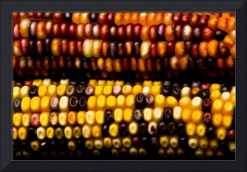 Colorful Corn - Fine Art Photography Print