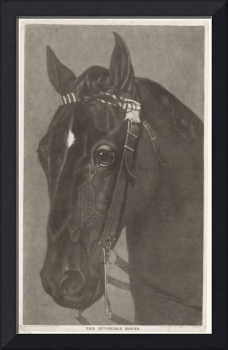 Head of a horse with a bridle, James Newman Hodges