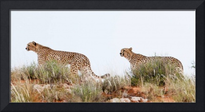 South Africa wildlife pictures