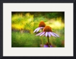 Cone Flowers and Hearts II by D. Brent Walton