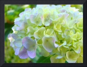 OFFICE ART Framed Prints Hydrangea Flowers