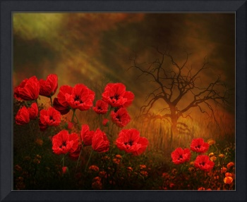 For the Love of Poppies