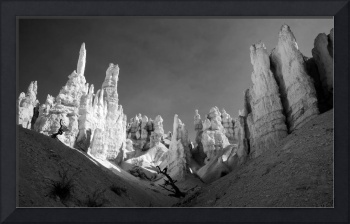 Bryce Canyon Infrared Desert
