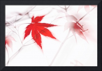 Maple Leaf Abstract 2