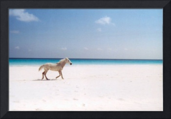 Horse on the Pink Sand Beach