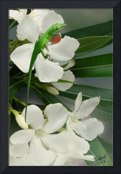Green Anole and Oleander