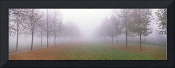 Trees in Fog Schleissheim Germany