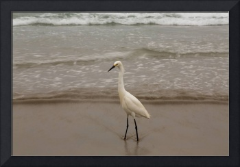 Scripps Pier Egret and water blur
