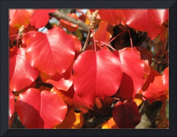 Red Leaves 2