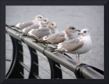 Seagulls Five