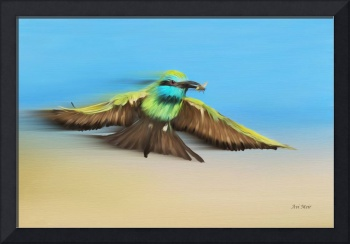 027 Little Green Bee-eater