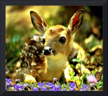 White Tailed Fawn Waiting For Mother