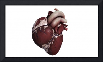 Three dimensional view of human heart, front