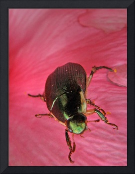 Beetle on Red Flower